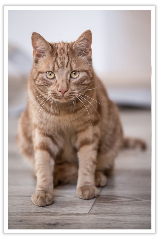 Ihre Katzenpension im Raum Landshut, Dingolfing, Straubing