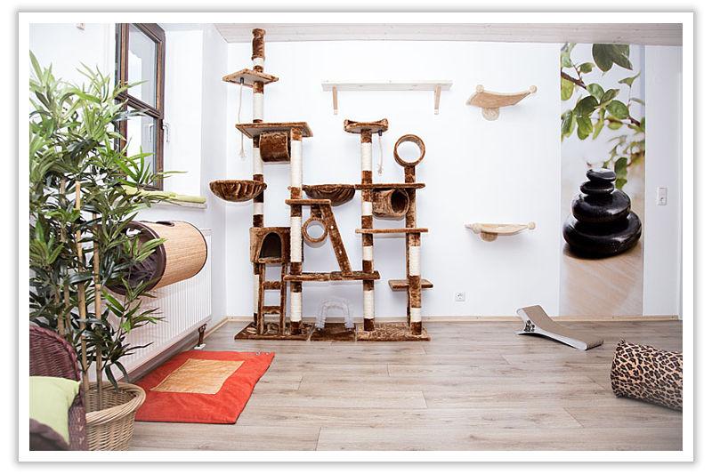 Bambuszimmer - Ihre Katzenpension im Raum Landshut, Dingolfing, Straubing