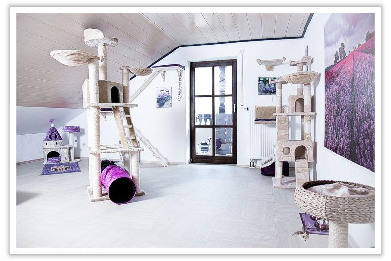 Lavendelzimmer - Ihre Katzenpension im Raum Landshut, Dingolfing, Straubing