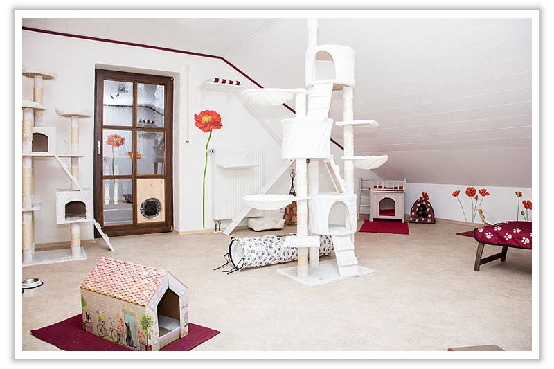 Mohnblumenzimmer - Ihre Katzenpension im Raum Landshut, Dingolfing, Straubing