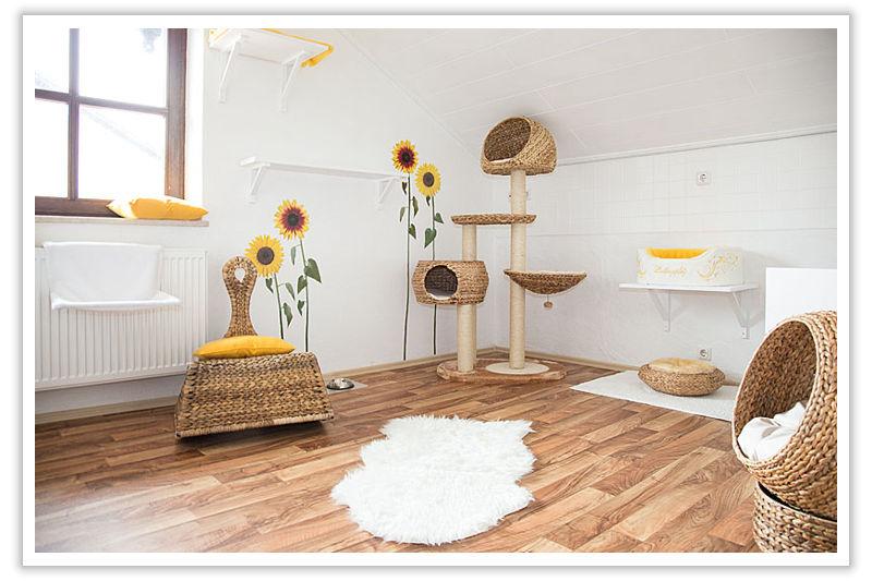 Sonnenblumenzimmer - Ihre Katzenpension im Raum Landshut, Dingolfing, Straubing
