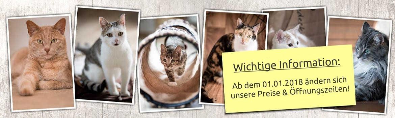 Katzenpension am Schlosspark